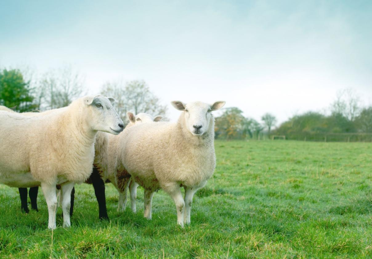 Natuurlijk slapen natuurlijke materialen wol paardenhaar Somnus matrassen en boxsprings Noord Holland Nico van de Nes Ursem schagen Broek op Langedijk